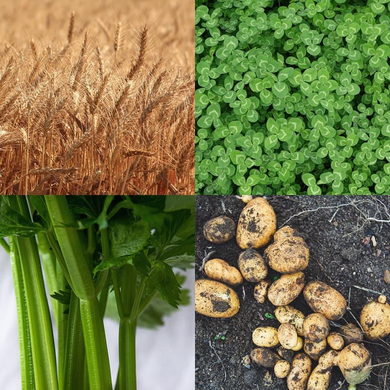 Auf dem Bild sieht man verschiedene Anbaukulturen wie Kartoffeln und Weizen.
