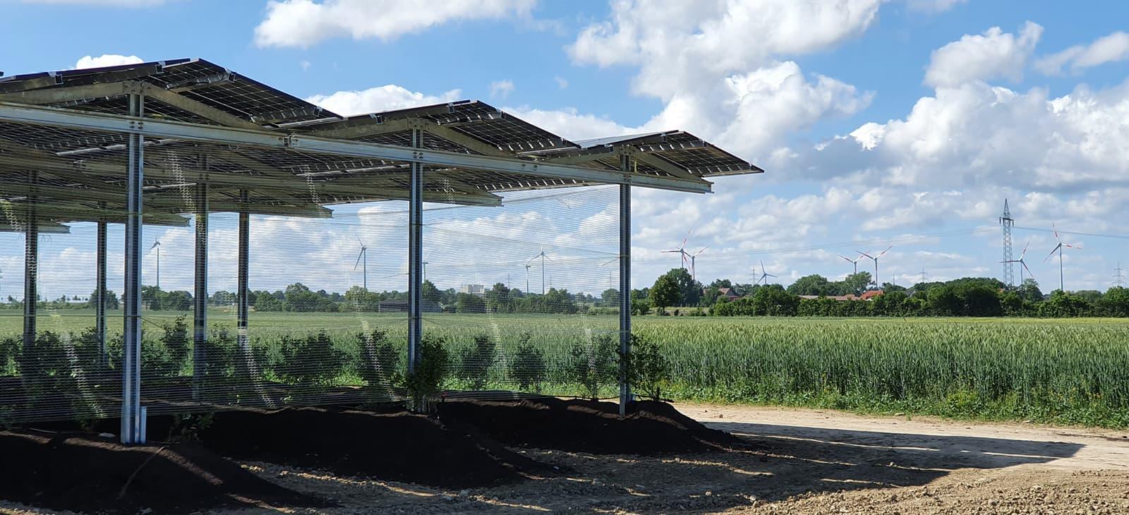Solarpaneele als Dach für Pflanzenanbau